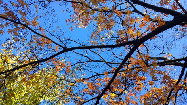 nokia lumia 1020 пример фото